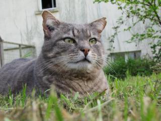 Spider chat tigré gris mâle FIV+ de 08/2005 - dpt 56 Img_0993-278e726